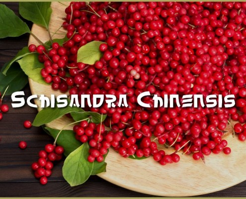 Schisandra-Chinensis-Nahrungsergaenzung-Ethno-Health-TCM-Superfood